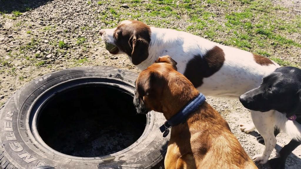 Kennels in Letterkenny Donegal