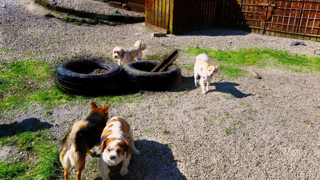 Dogs playing outside. Kennels Donegal.
